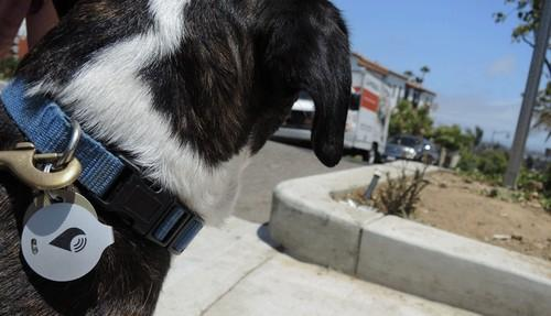 TrackR makes small tagging devices that can be attached to pets, keys or electronics for GPS tracking.