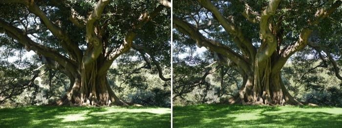 There is a setting for processing HDR shots in the camera. The left is without HDR, the right is with HDR.